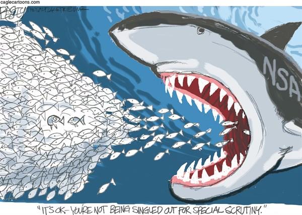 Nsa shark